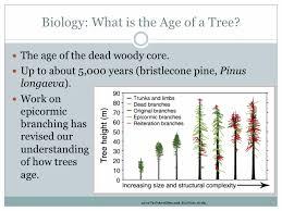 Conifer Longevity