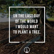 Inspirational Quotes About Trees One Tree Planted