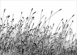 tall grass silhouette. July Grasses Tall Grass Silhouette D