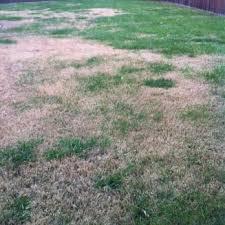 photo of trugreen lawn care virginia beach va united states dead spots
