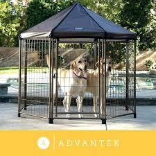 advantek the original pet gazebo outdoor kennel pet gazebo the original pet gazebo medium advantek the advantek the original pet gazebo outdoor kennel