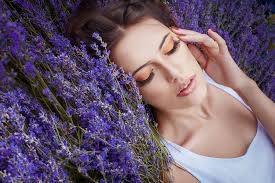 Plant knowledge: Lavender oil's benefits and risks