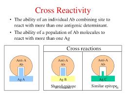 Antigen And Antibody Reactions