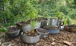 Container Vegetable Gardening Ideas  Landscaping U0026 Backyards IdeasContainer Garden Ideas Photos