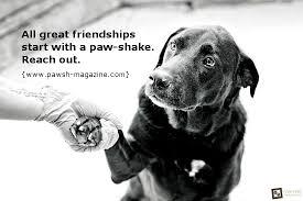 Dog Quotes Inspirational Mesmerizing Inspirationaldogquotestorontopetphotographer JoJo Bayvel's Blog
