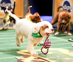 puppy bowl 2015 falcor. Delighful Bowl Animal Planet Puppy Bowl XI Intended 2015 Falcor Vetstreet