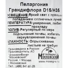 Пеларгония грандифлора 15х35 см в Ставрополе – купить по ...