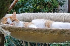 Ein Katzenblog Mit Vielen Diy Ideen Für Deine Katzen
