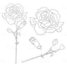 カーネーション カーネーション花の概要 クローブ ピンクスペインモナコ