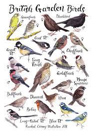 British Garden Birds Chart British Garden Birds A4 Or A3 Poster