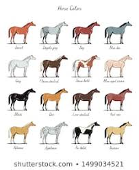 Breeds Horses Images Stock Photos Vectors Shutterstock