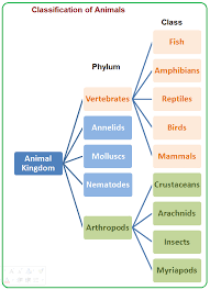 The Animal Kingdom Contains Many Phyla Some Of Them Are