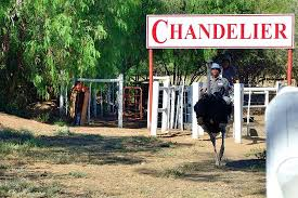 chandelier game lodge ostrich show farm oudtsn 2019 all you need to know before you go with photos oudtsn south africa tripadvisor
