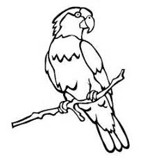 th?id=OIP.d7m KO WSumgxVA87LdzGgEmEs parrot outline coloring page coloring pages on parrot outline template