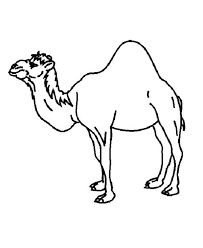 Small Picture A One Humped Camel Coloring Page Free Printable Coloring Pages