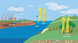 carbon dioxide and the carbon cycle science interactive pbs  carbon dioxide and the carbon cycle