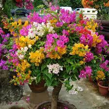 flowers near my location plants for garden nursery near my location home decor lotus