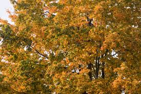 Fall Images Free Free Stock Photos For Personal Commercial Projects Reyher Photo