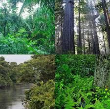 Resultado de imagem para fotos de florestas temperadas e subtropicais