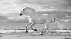white horses running. Wonderful White Horse Photograph  Run White Horses IIi By Tim Booth For Running