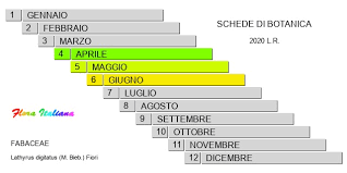 Lathyrus digitatus [Cicerchia digitata] - Flora Italiana