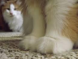 cute fluffy cats tumblr. Perfect Tumblr In Cute Fluffy Cats Tumblr