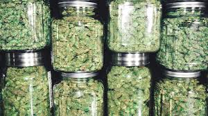 Etfmg Stock Chart Mj Etf Owns Multiple Marijuana Stocks And Some Biotech Names