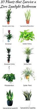 office plants no light. Low Maintenance Office Plants Best Light Indoor No Sunlight