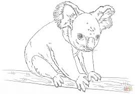 Small Picture Koala sitting on a branch coloring page Free Printable Coloring