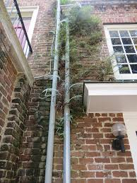 Downspout Photograph by Janice Rhodes