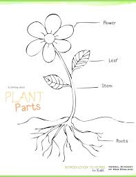 Parts of a seed diagram worksheet
