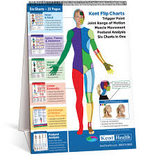 Muscle Pressure Points Chart Flip Chart Trigger Point