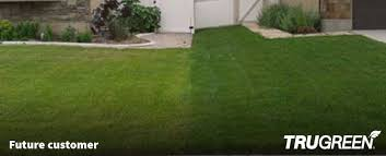 untreated lawn compared to a trugreen lawn in ogden