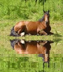 """Résultat de recherche d'images pour """"chevaux animes"""""""