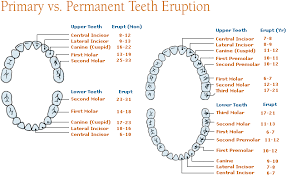 Teeth Age Chart Baby Teeth Are A Big Deal Alexandria Smiles