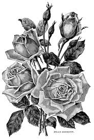 Vintage Flower Clipart Black And White 20 Free Cliparts Download