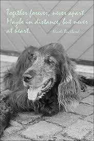 Erster Todestag Spruche Spruchbild Mit York Trauer Tod Sprüche Hunde