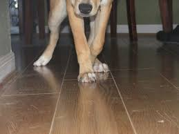 durable laminate flooring and pet proof flooring also best flooring for dogs