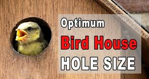 Bird House Hole Size Best Dimensions