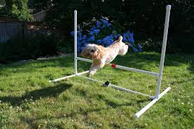 picture of dog agility jump