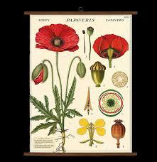 Vintage Botany School Chart