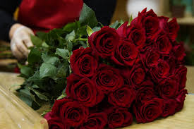 Картинки по запросу цветы розы