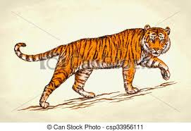 color tiger drawing. Perfect Tiger Engrave Ink Draw Tiger Illustration With Color Drawing