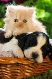 cute puppy and kitten best friends.  Cute Aww So Cute Puppy And Kitten Are Best Friends Inside Cute And Kitten Best Friends R