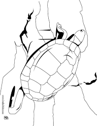 Small Picture Galapagos tortoise coloring pages Hellokidscom