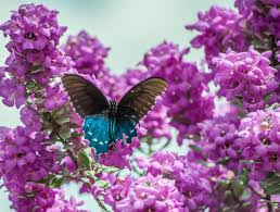 Image result for moths and butterflies