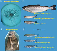Transgenic Animals Gene Environment Interactions Influence Ecological