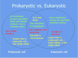 Organelles In Plant And Animal Cells Venn Diagram Prokaryote Vs Eukaryote Plant And Animal Cells Kathy