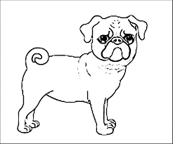 coloring pages pug puppy pug