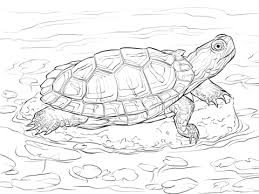 Small Picture Red Eared Slider coloring page Free Printable Coloring Pages